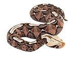 snake web.jpg
