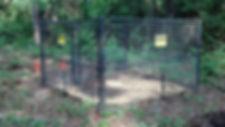Wild Hog Removal Contact Allstar Wildlife