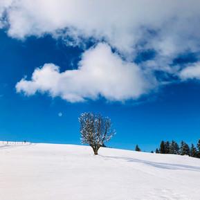 montagne2.jpg