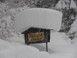 Mollia - Benvenuti!