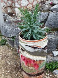 Plante tinctoriale.jpg