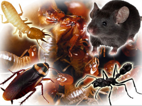 How to Find a Good Exterminator on Long Island