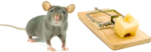 ratcheese.png