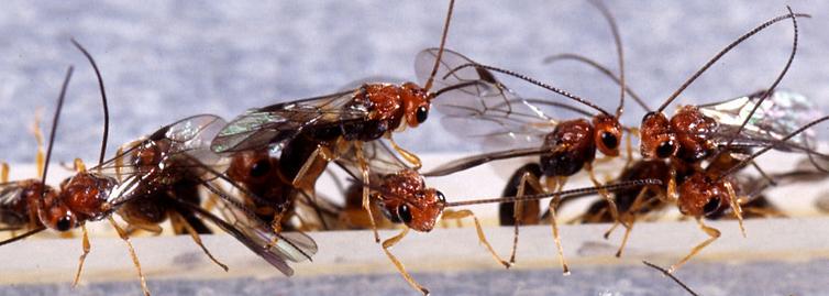 fruit flies.PNG
