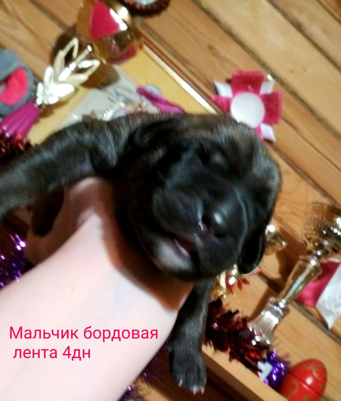 СЕРКАН  Резерв Мальчик 4дн