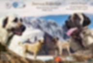 кангал, купить кангала, щенки кангала, фото кангал, видео кангал, питомник кангалов, кангалы в России, кангалы в Москве, турецкий кангал, купить щенка кангала,кангалы РКФ, Звезда Кангала