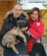 купить щенка кангала, питомник кангалов, анатолийская овчарка, Под звездой кангала, турецкий кангал