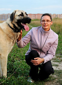 """Анатолийская овчарка (кангал). """"Под звездой Кангала"""". Щенки кангала"""