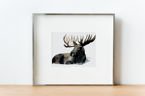 Bull Moose, Watercolor Print, Realism
