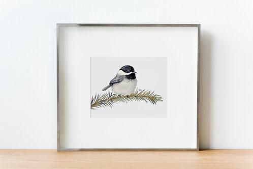 Chickadee Watercolor Print, Bird on Pine Branch