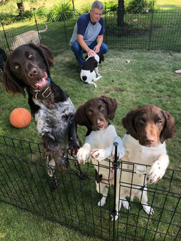 Luna and the B litter