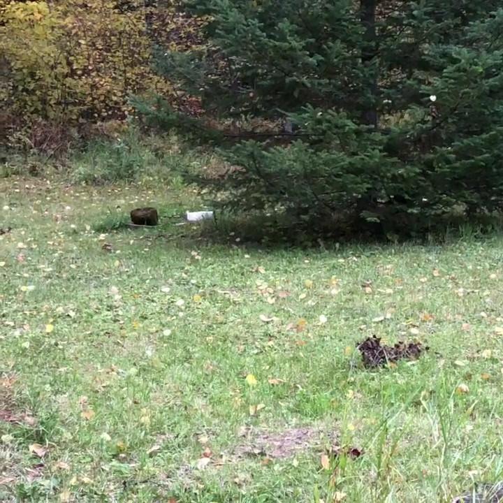 Remi against Squirrels