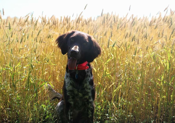 Remi in front of Wheat