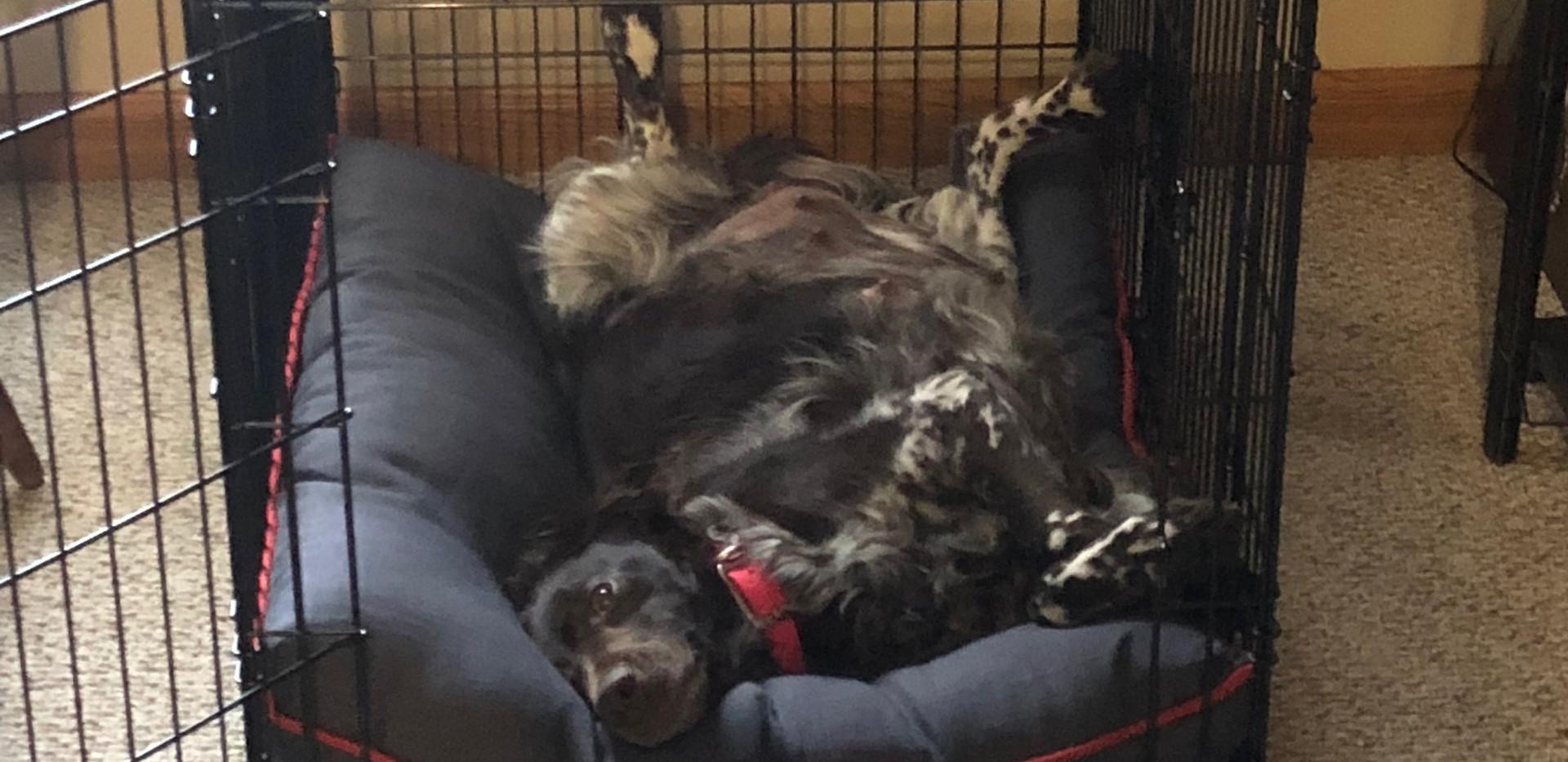 Pregnant Remi Resting