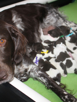 Remi & her babies!