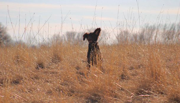 Luna Enjoying the Fields