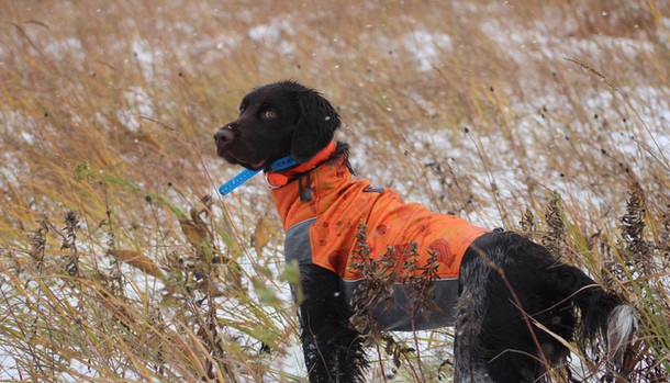 Hunting in the start of a snow storm