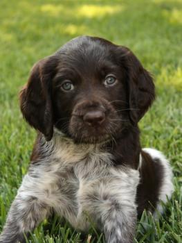 A Litter Puppy