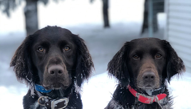 Luna on the Left