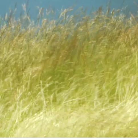 """Wave field"" Edward Tufte & Arvo Part"