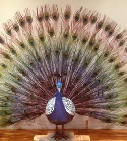 Telus Peacock.jpg