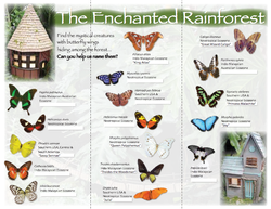 Enchanted Forest Brochure