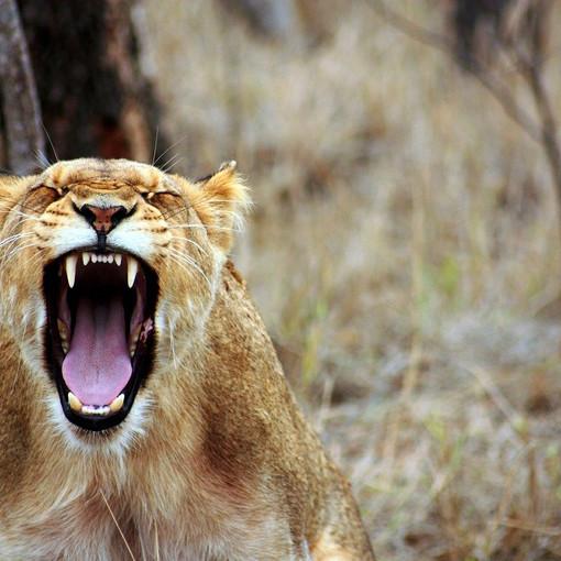 לכעוס, להתפלל, לאהוב: הכעס, גרסת היהדות