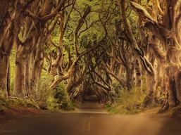 היער כמרחב חניכה