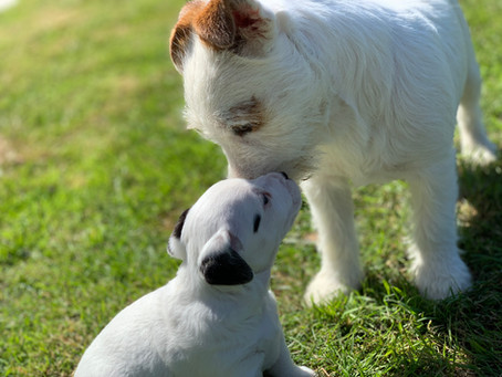 What Constitutes a Puppy Farmer?