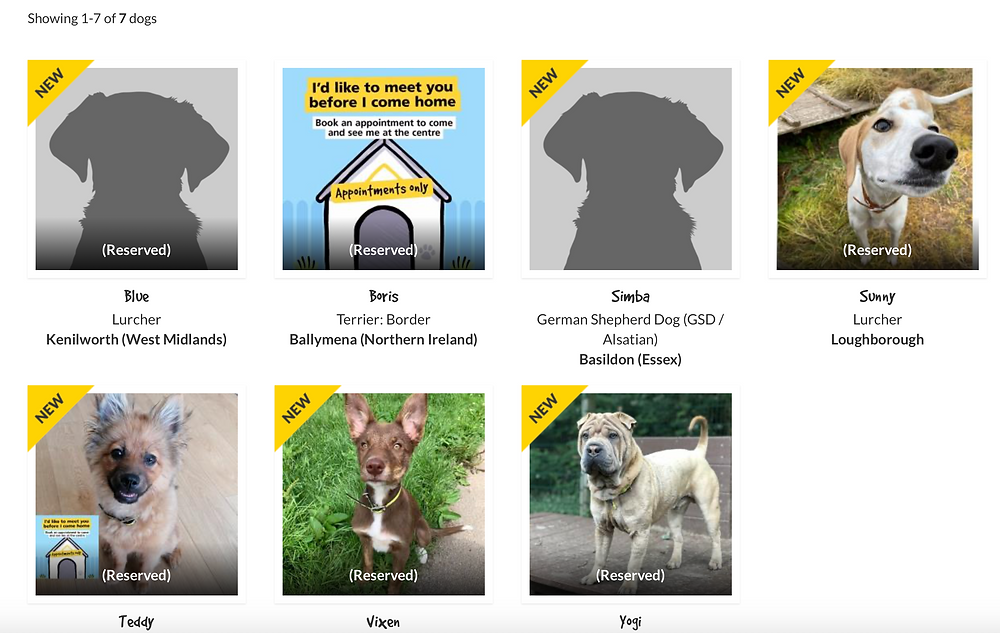 Screenshot of dogs under a year old on The Dogs Trust Website.