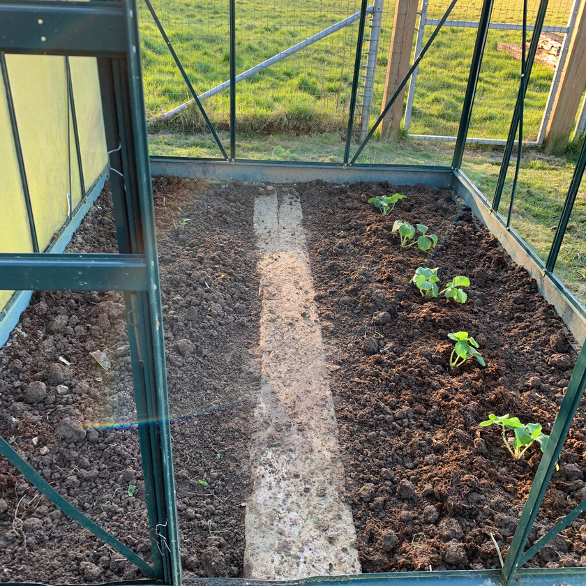 One of my newly dug over beds now planted with strawberries