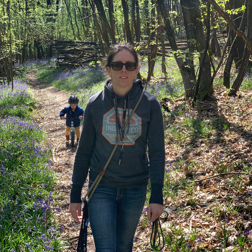 Walking the dogs through a bluebell wood