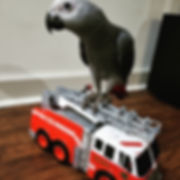 groot on fire truck.jpg