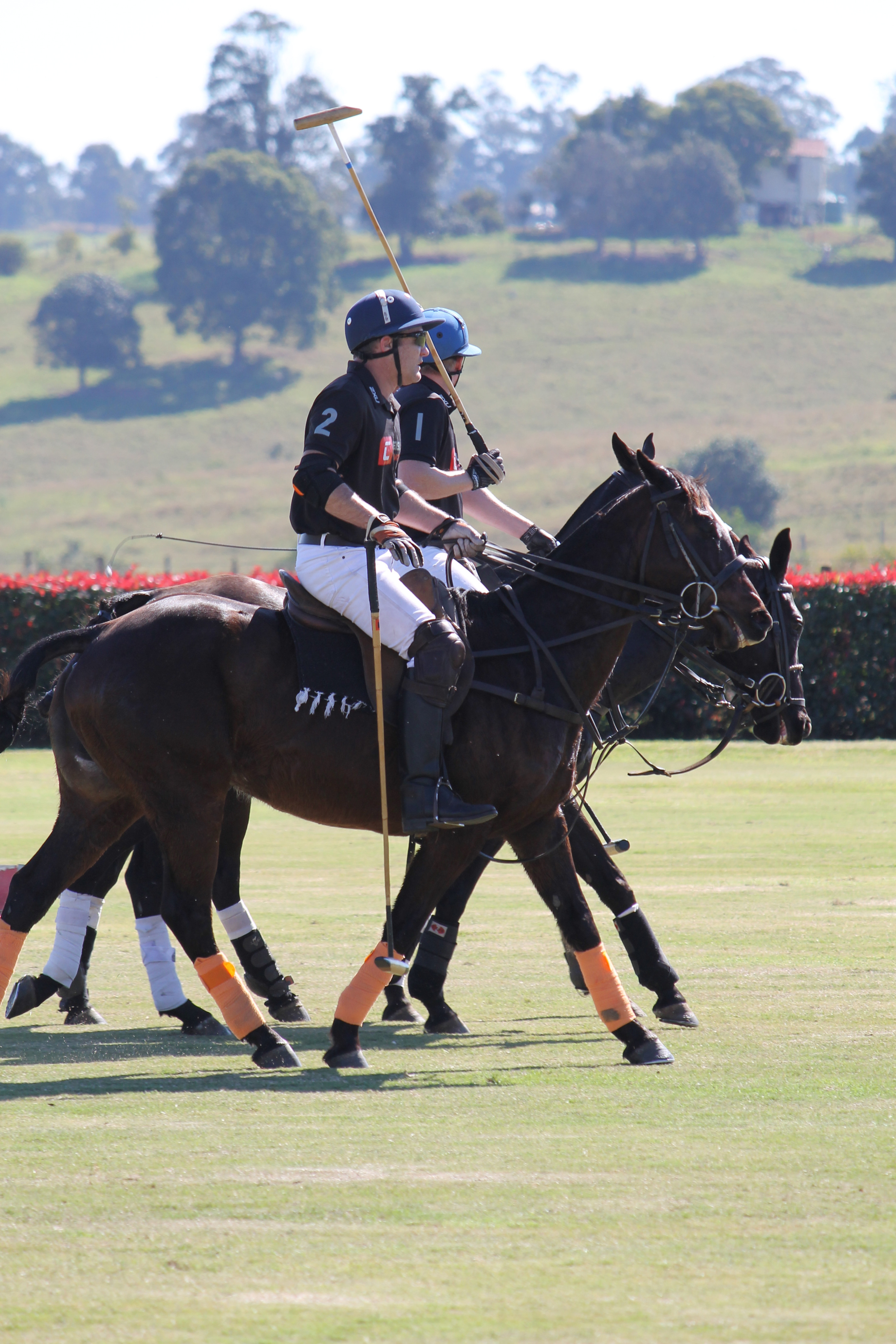 Learn to Play Polo