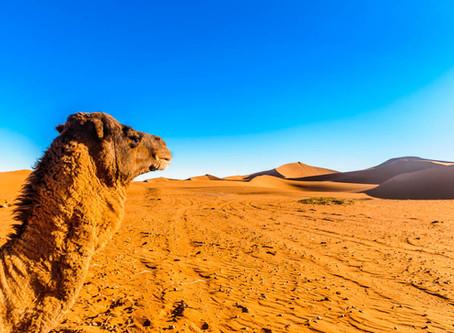 5 nejlepších zážitků v Maroku