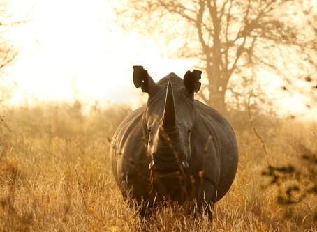 5 nejlepších zážitků v Jihoafrické republice