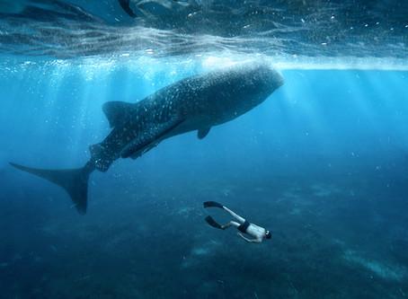 5 nejlepších zážitků v Mozambiku