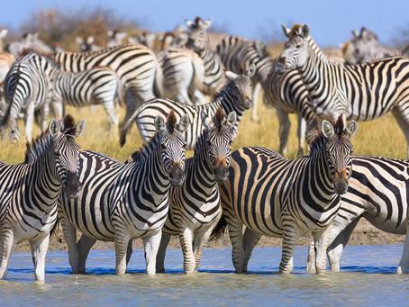 5 nejlepších zážitků v Botswaně