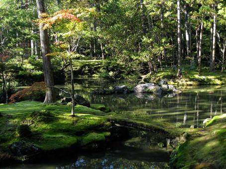5 nejlepších zážitků v Japonsku