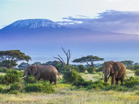 5 nejlepších zážitků v Keni