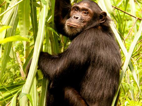 5 nejlepších zážitků v Tanzánii