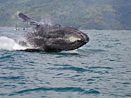 5 nejlepších zážitků v Kostarice