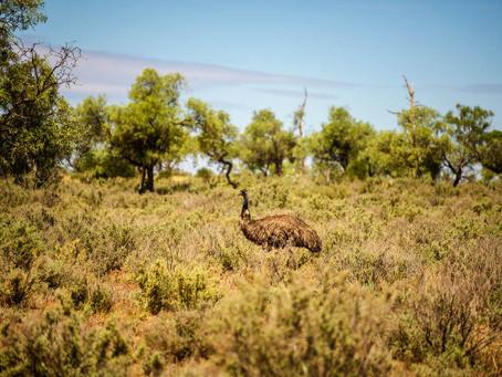 5 nejlepších zážitků v Austrálii