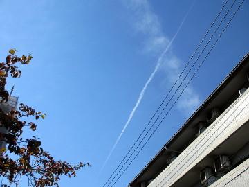 秋空に、飛行機雲がスーッと伸びていきました。
