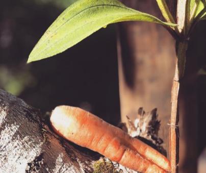 LUA MINGUANTE - NUTRIÇÃO, RECONEXÃO COM A NATUREZA