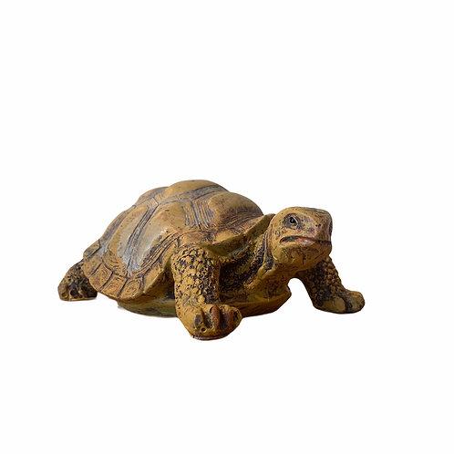 Mummy Tortoise