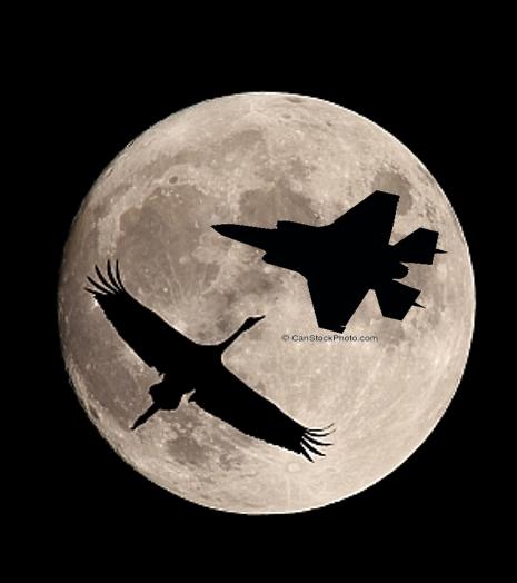 מטוס וציפור.PNG