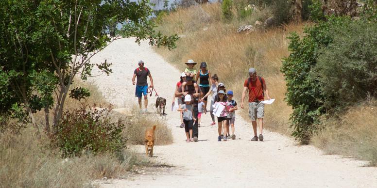 ניווט כלבים ביער אשתאול