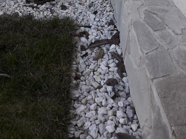 stříbrnošedý obkladový kámen