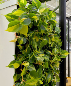 Living Wall Dividers